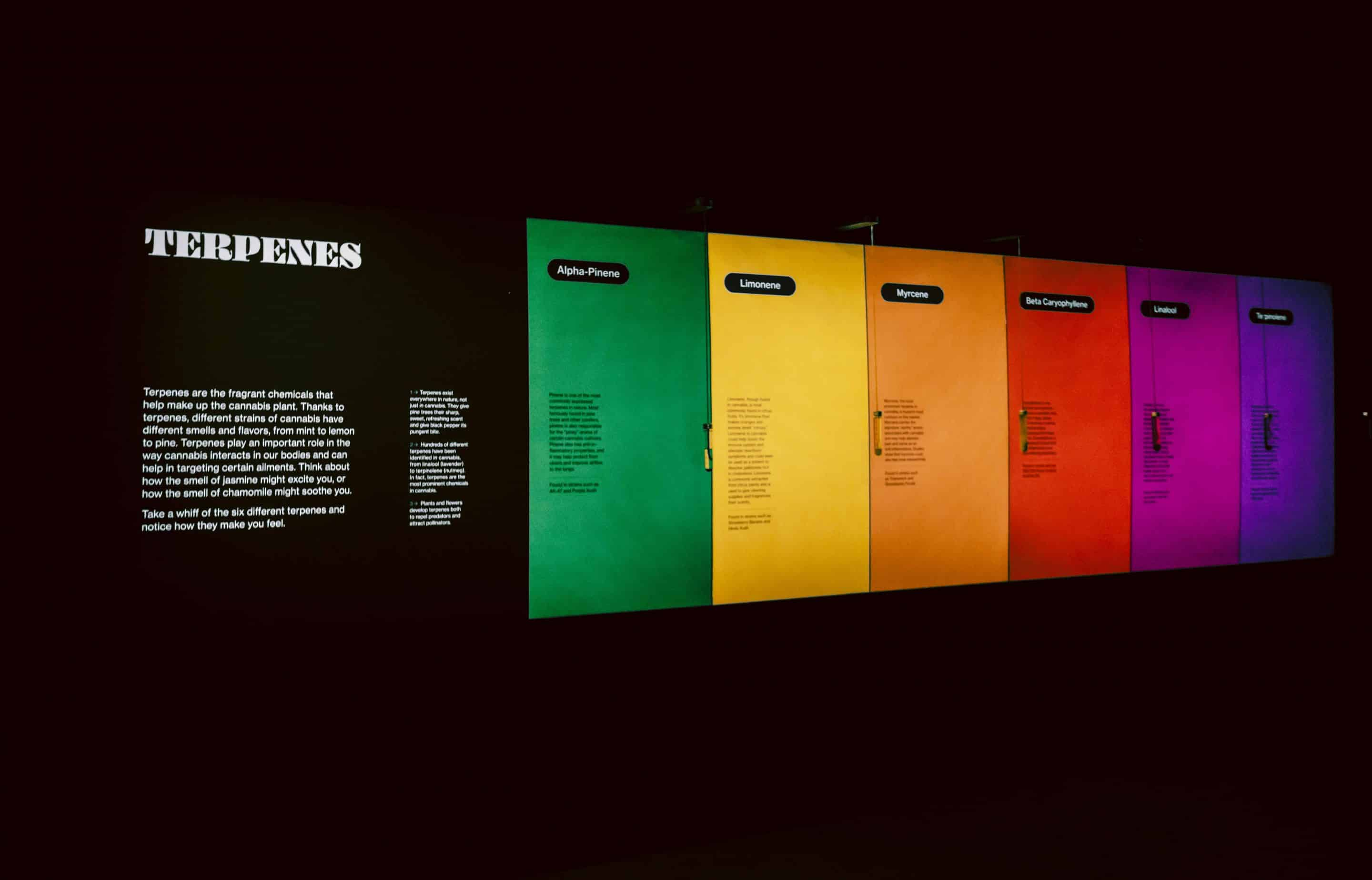"""In """"The Plant Lab"""" exhibit, guests to the museum can learn about terpenes and even smell the different kinds."""