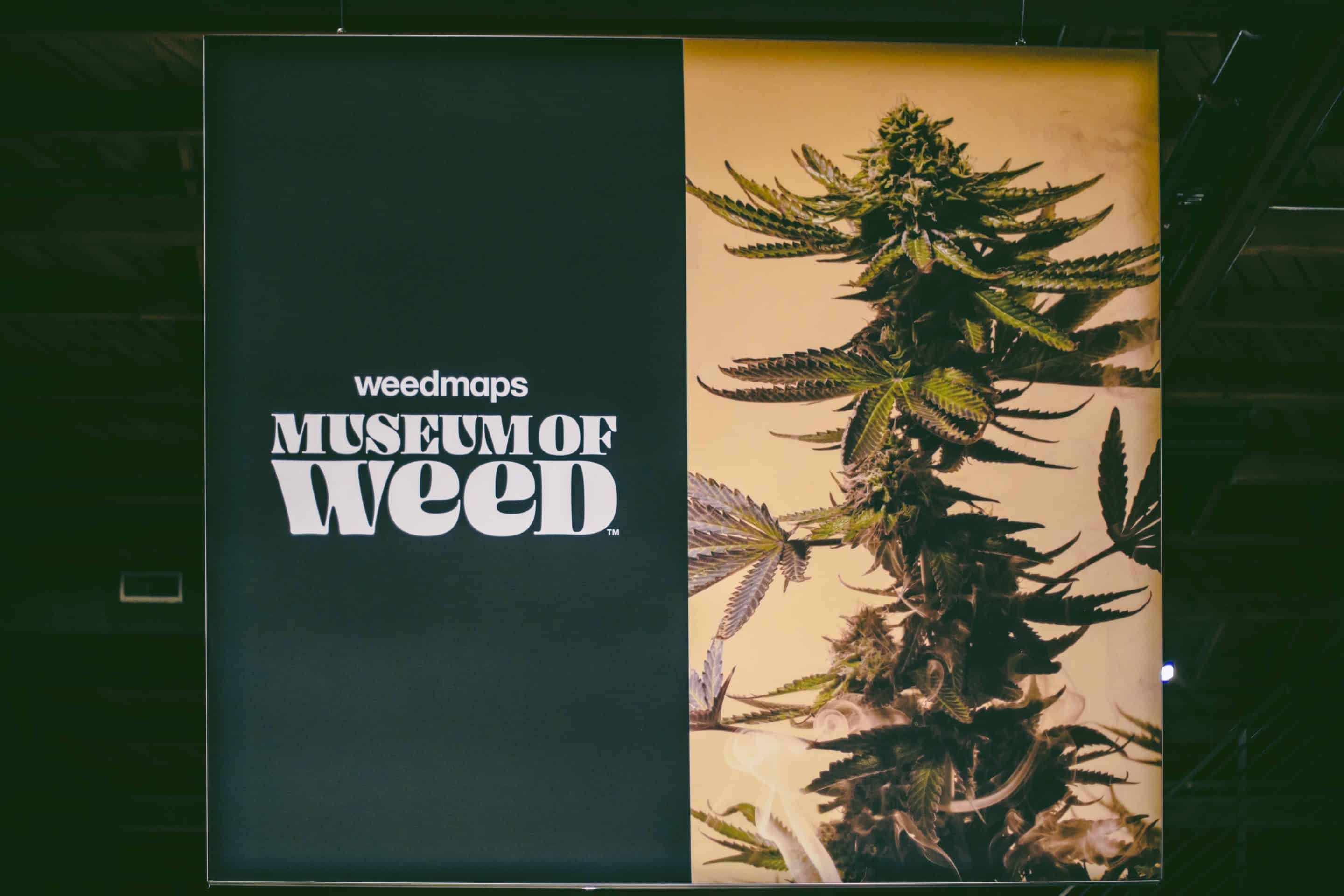This Blunt Talks event was held at Weedmaps Museum of Weed, which finishes up its stint in Los Angeles Oct. 27.