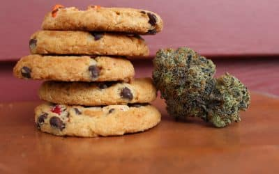 Edible Cannabis: Navigating a growing landscape