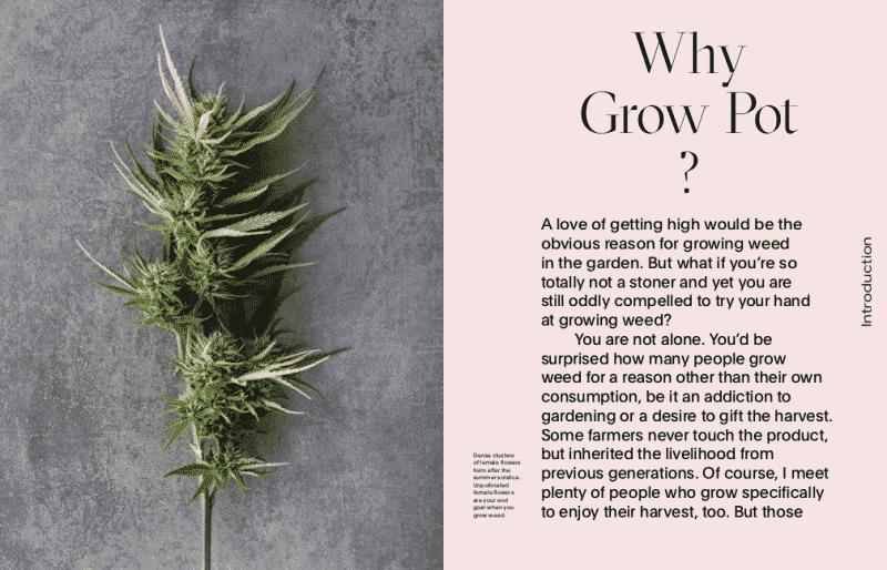 Growing Weed Sample Pages 11 copy